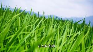 SnapShot(1)